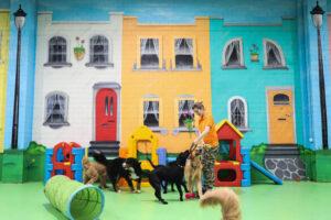 doggie daycare, puppy daycare melbourne