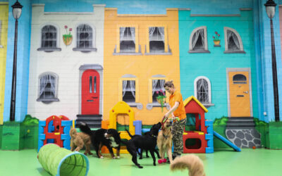 Why Sending Your Dog to Doggie Daycare Is a Good Idea