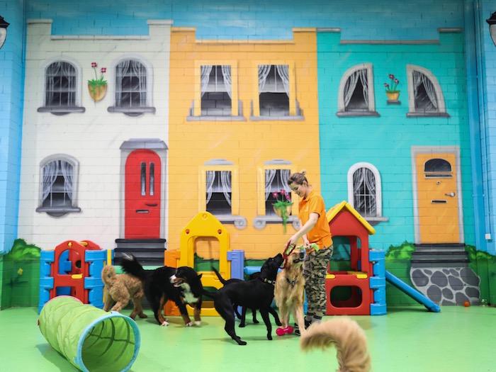 doggie daycare, puppy daycare
