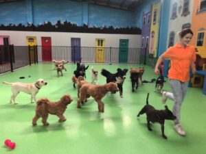 doggie daycare melbourne, dog daycare camberwell