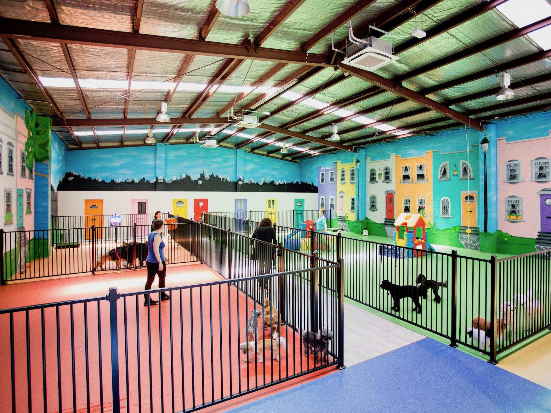 doggie daycare surrey hills, dog daycare