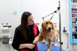 Professional Dog Grooming Burwood