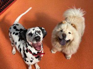 puppy daycare, doggie daycare glenwaverley