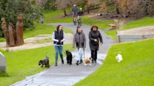 dog groomer burwood, dog daycare burwood