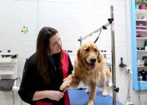 camberwell dog grooming, puppy grooming