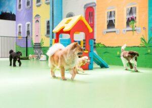 camberwell doggie day care, puppy day care
