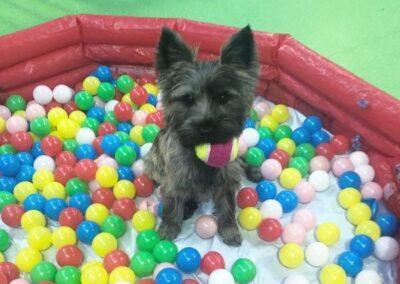 doggie day care camberwell, dog daycare