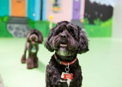 dog daycare camberwell, doggie day care