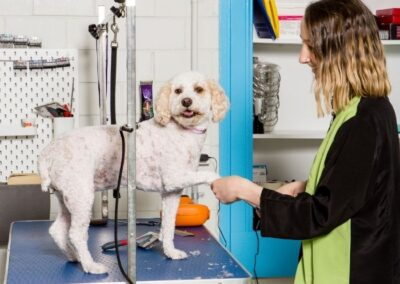 camberwell dog grooming, poodle grooming camberwell