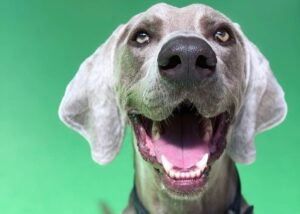 Benefits of Professional Dog Grooming Melbourne