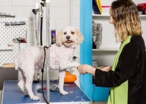 Professional Dog Grooming Melbourne
