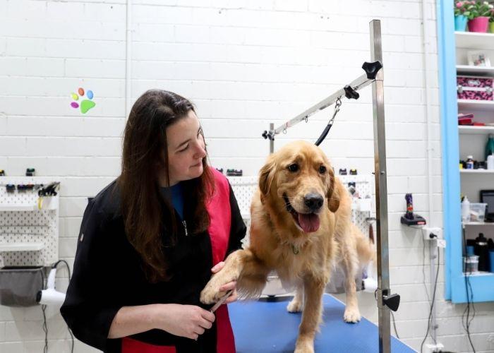 Professional Dog Nail Cut Melbourne