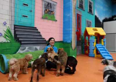 Doggie Day Care Melbourne, Ashwood Puppy Day Care