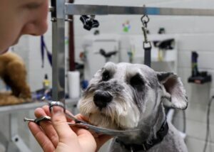 Dog Grooming Ashwood, Ashwood Dog Wash