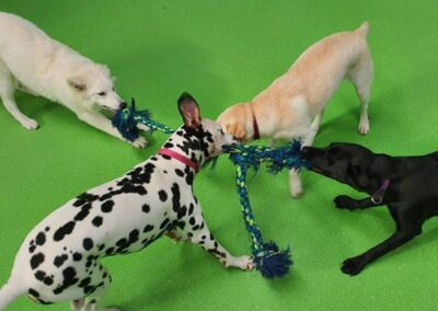Doggie Daycare Melbourne, Ashwood Puppy Day Care