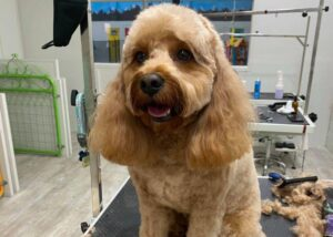 Dog Wash Ashwood, Ashwood Dog Haircuts