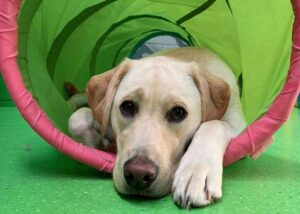 Puppy Day Care Ashwood, Doggie Day Care Melbourne