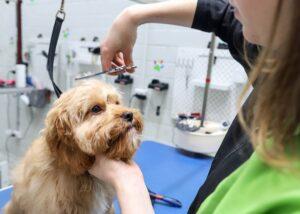 Ashwood Dog Grooming, Dog Wash Ashwood
